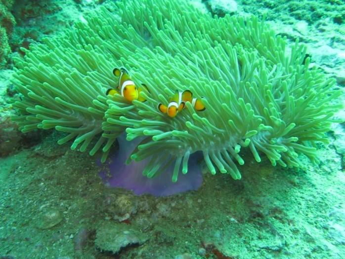 krabivillas rental diving 2
