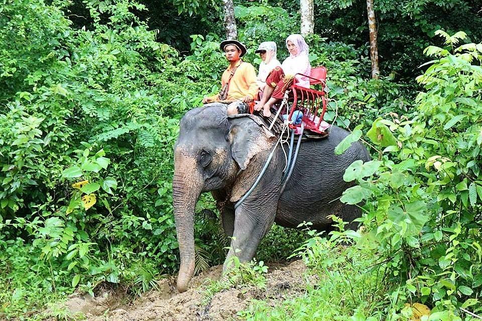 krabivillas rental elephant trekking